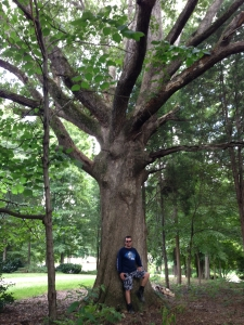 Charlotte Tree Service, Tree Removal, Tree Trimming, Tree Pruning, Charlotte, NC