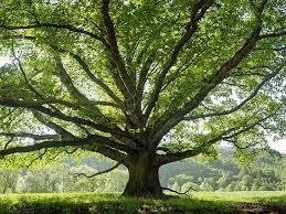 Tree Health Charlotte NC