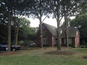 Charlotte Tree Trimming and Tree Pruning