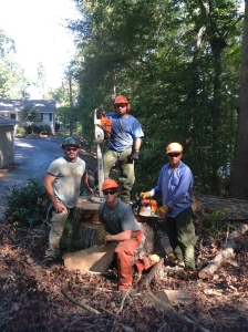 Stump Removal and stump grinding in Charlotte, NC